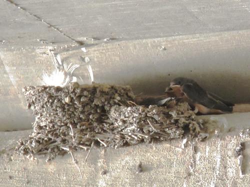 Nesting bird under Siegen.