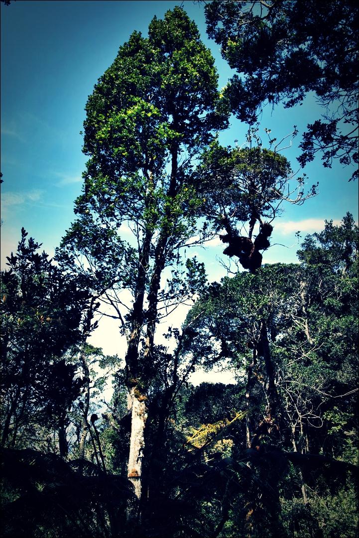 파란 하늘-'키나발루 산 등정 Climbing mount Kinabalu Low's peak the summit'