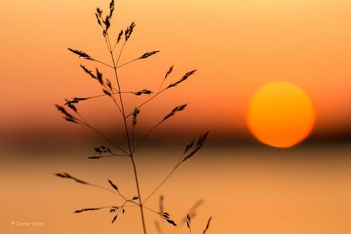 sunset norway norge sonnenuntergang magic horizon norwegen horizont kvisvik magnillen magnhildberget dietergora magnillencamping