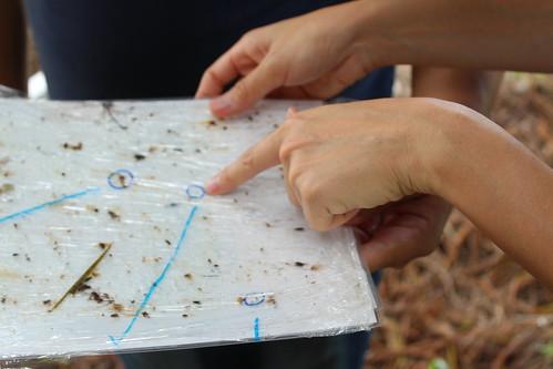以黏蟲板了解昆蟲相。