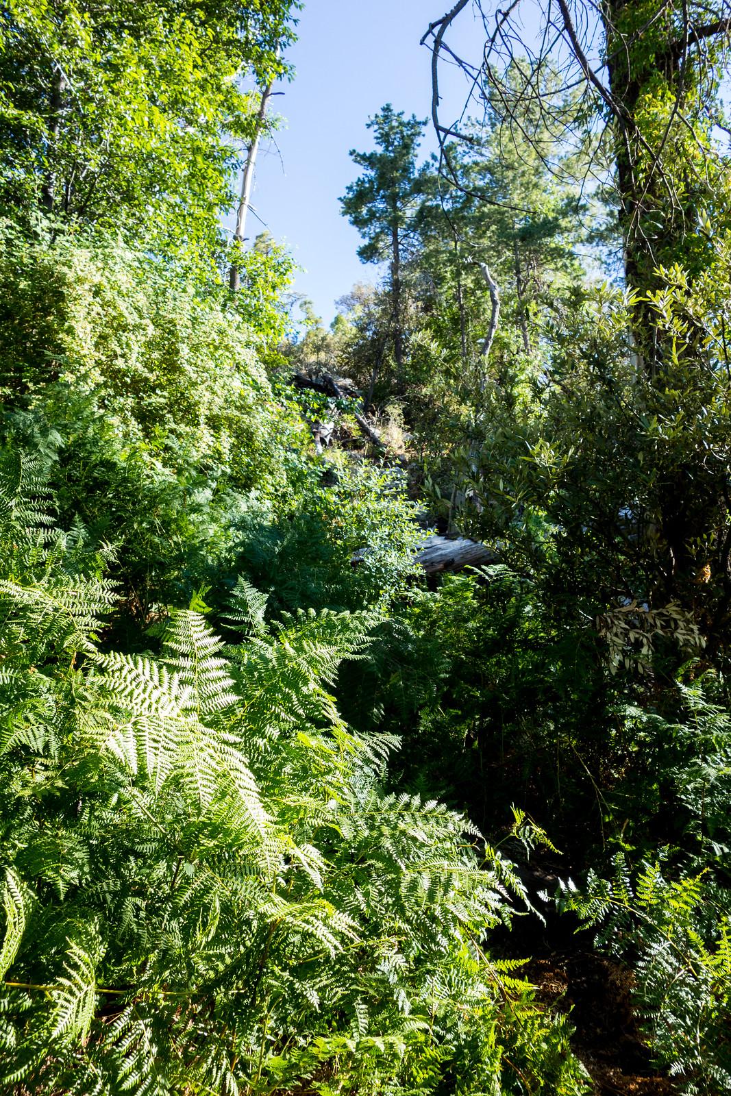 1407 Ferns and Green near Maverick Spring
