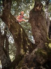 Climbing an Oak