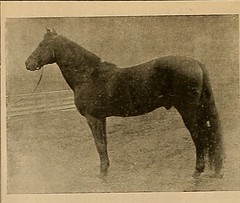"Image from page 83 of ""Breeder and sportsman"" (1882)"