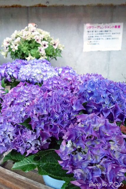 26日本東京原宿車站
