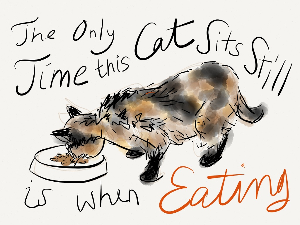 "Our cat Raisin drawn with the ""Paper"" app 1"