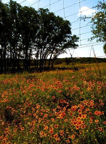 flowers sky clouds landscapes texas wildflowers hillcountry