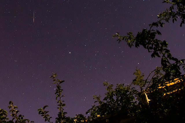 Another Perseid!