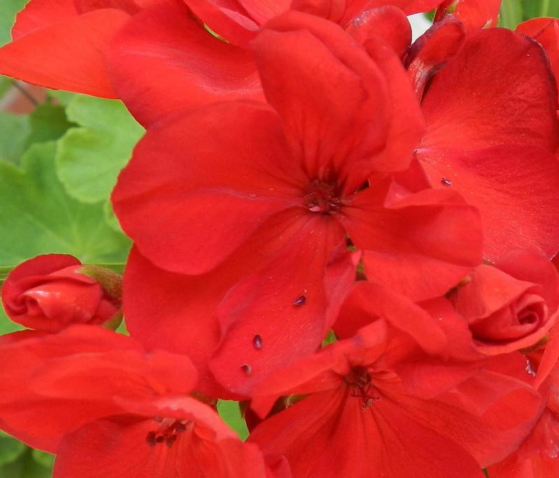 today'sflowersDSCN5197