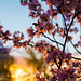 Spring has Sprung by Rikardo daVinci