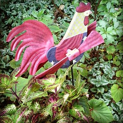 Rooster whirl-a-gig (for decoration) next to a gorgeous coleus.