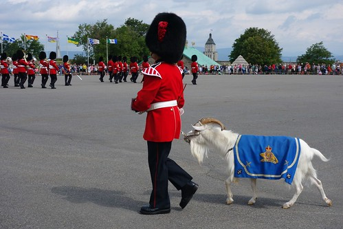 The goat at the changing of the guard