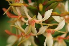 honeysuckle, flower, plant, flora,