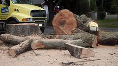 Big Tree_1652