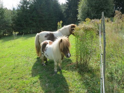 horses horse sweden sverige häst hästar vikersvik