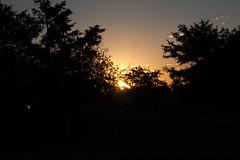 Sunrise in Joes
