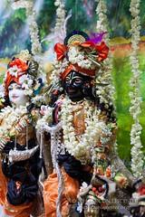 Balarama_Jayanti_10-08-14_9691