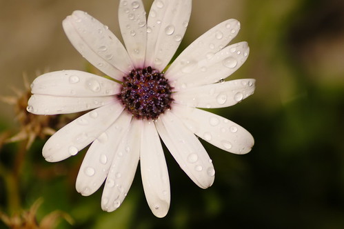 Flor-macro-elpocico-albanchez-almeria