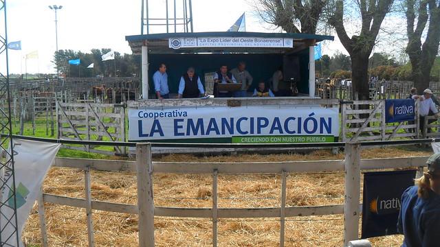 Expo Rural Salliquelo 2014