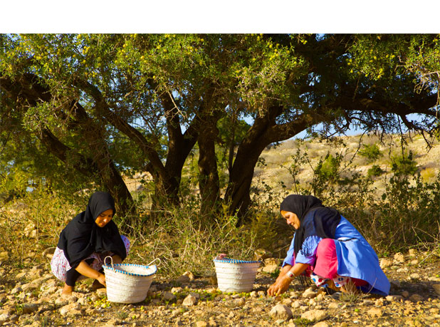 harvesting_wild_argan_fruits_1-48