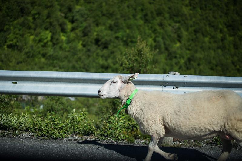 Norge roadtrip-116
