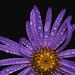 Purple Rain by charhedman - off and on