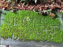 Moss art - only in the Northwest
