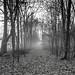 Mist by jaros 2(Ron)
