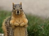 Squirrel, Morton Arboretum. 379 (EOS)