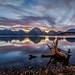 Jackson Lake Driftwood at Sunset by Jeffrey Sullivan