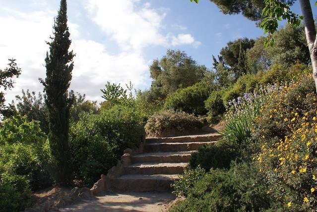 > Cyprès, pins et végétation méditéranéenne au parc Guell à Barcelone