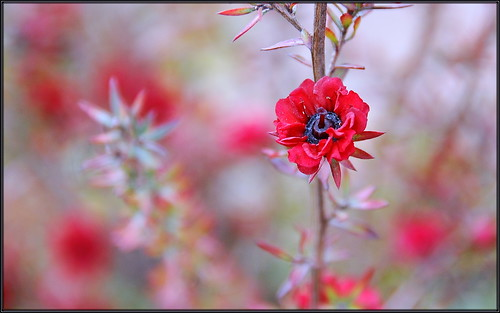 Tiny Red Flower