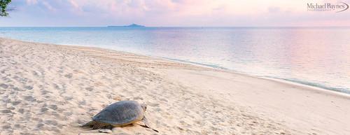 ocean sea water sunrise island sand turtle wildlife malaysia borneo sabah hornbill