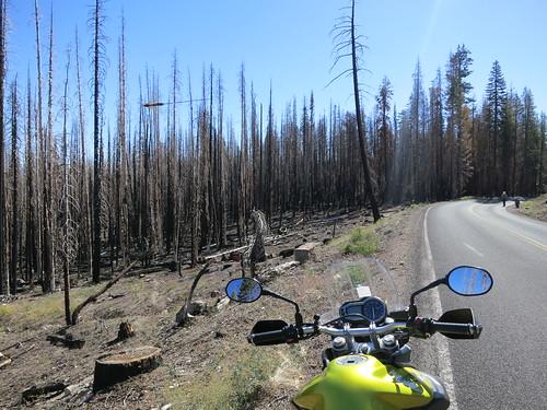 arbres brulés