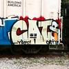 Yikes! Cats! #catsagain #catcult @catcult #yikes #train