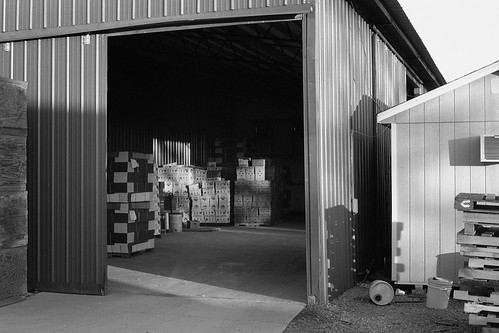 bw film 35mm october tennessee storage boxes 2009 dayton applebarn ilfordfp4plus iso125 canoneoselan7