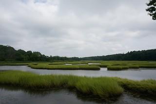 Scenic Marsh