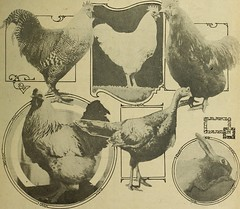 """Image from page 638 of """"The Utah Farmer : Devoted to Agriculture in the Rocky Mountain Region"""" (1913)"""