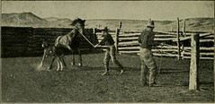 """Image from page 268 of """"Illustrated history of the Union Stockyards; sketch-book of familiar faces and places at the yards"""" (1901)"""