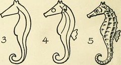 "Image from page 66 of ""Drawing made easy : a helpful book for young artists; the way to begin and finish your sketches, clearly shown step by step"" (1921)"