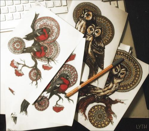 birds-pics
