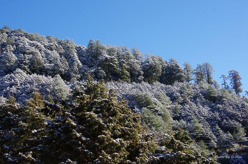 """20140220大""""雪""""山森林遊樂區(圖多)"""