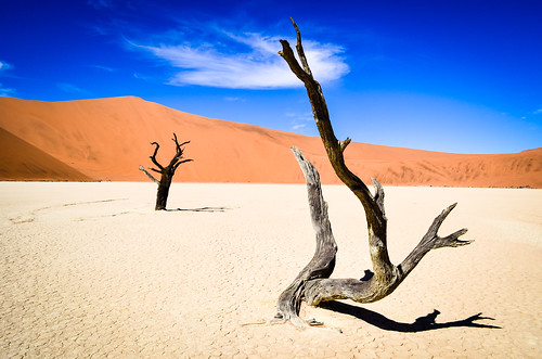 Arbres pétrifiés dans Dead Vlei, Namibie
