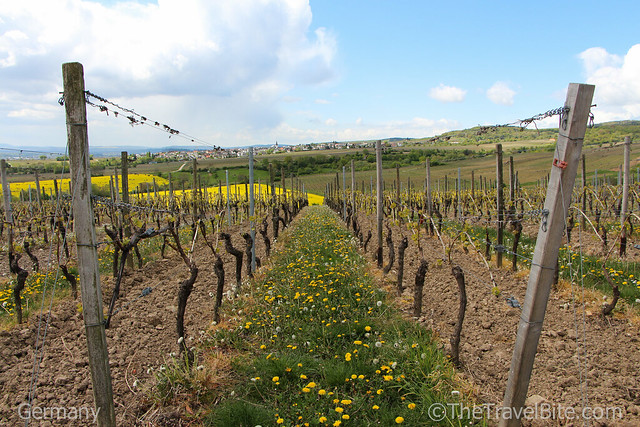 Rheingau Wine Region Germany-41