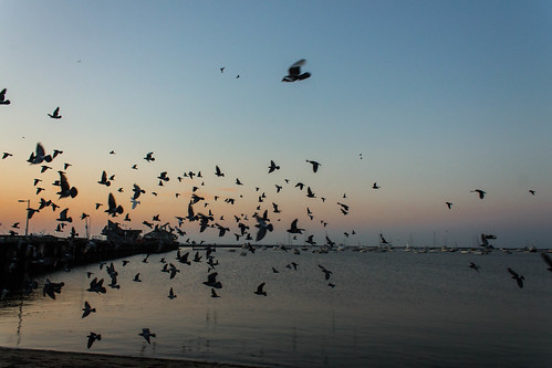 ocean morning beach birds sunrise provincetown pigeons flock seabirds 2014