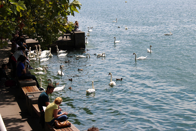 Zurich and swans2