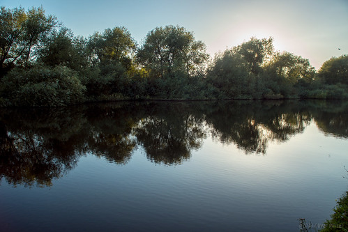 uk blue trees summer reflection water thames river mirror calm surrey backlit oru riverthames autmn 2014