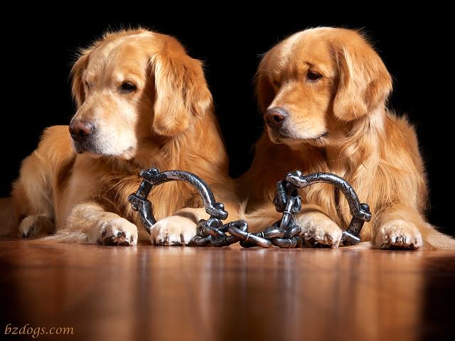 Jail Bird Dogs