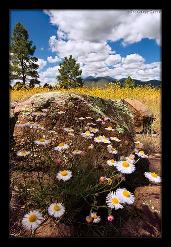 summer arizona mountains nature clouds daisies canon landscape rocks meadow flagstaff sunflower daisy wildflowers sanfranciscopeaks dslr coconinonationalforest humphreyspeak mthumphreys buffalopark