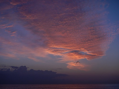 sunrise alba 1001nights gabbiano portoverde rebranca 1001nightsmagiccity italy2014