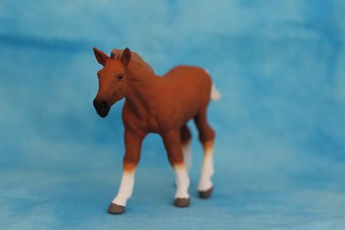 Walkaround of the 2014 Mojo Fun Suffolk Punch Foal 15064215002_7066355d5a